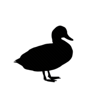 Krmivo pro kachny a husy