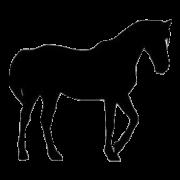 Krmivo pro koně