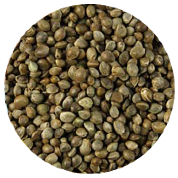 Konopí semenec 1 kg
